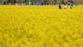 Disfrutando del campo de colza