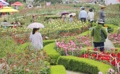 Parc de roses à Samcheok
