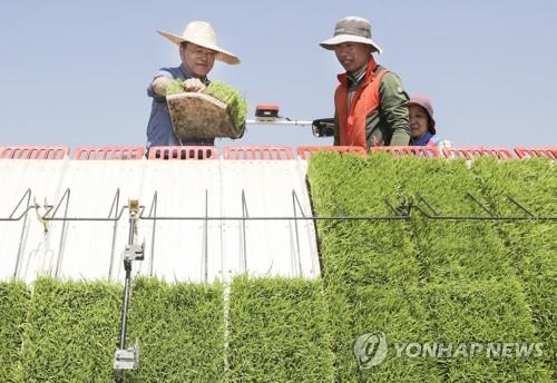 Moon meets farmers planting rice in Gyeongju