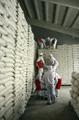 정부, WFP 통해 국내산 쌀 5만t 북에 제공