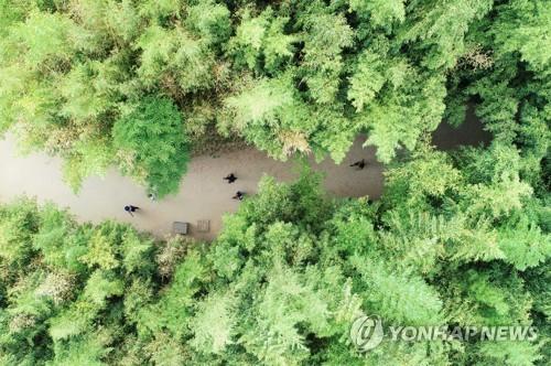 담양 죽녹원, 지방정원 2호 등록…생태관광 중심지로 육성