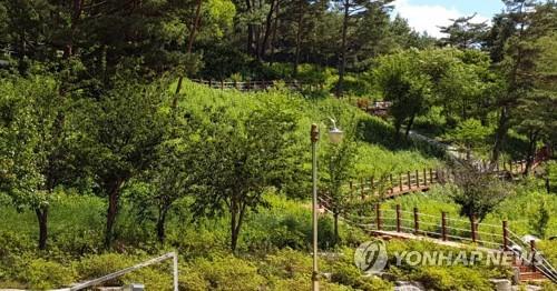 '산림만 85%' 홍천군 곳곳에 산림휴양단지 조성