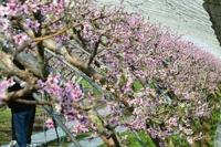 '성큼 다가온 봄'…전국 대체로 맑고 포근