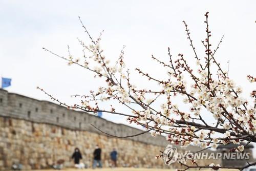 [내일날씨] 한식·식목일에 꽃샘추위…아침 최저기온 -5도