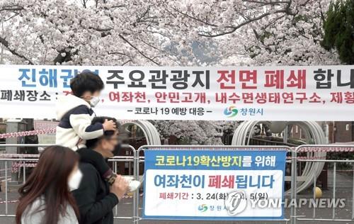 """""""상춘객 막아라""""…진해 벚나무 철벽 방어에 봄 느낌도 '썰렁'"""